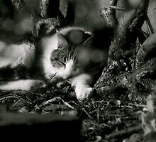 Time out - a perfect hiding place by Rory Paterson