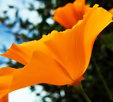 Orange Poppies by Susie Peek
