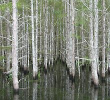 Cypress Trees at the Edge of the Jane Green Swamp by marshbunny