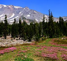 Panther Meadows, Mount Shasta by Amy Hallowes