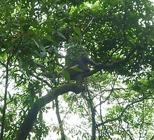 wild monkey playing peek a boo with me from shady tree in the jungle by Joseph Green