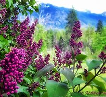 Lilac Dreams by rocamiadesign