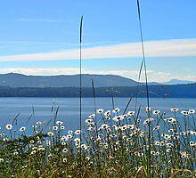 Parker Island, BC by Pamela Raymond