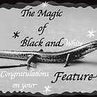 Magic of Black and White by waxyfrog