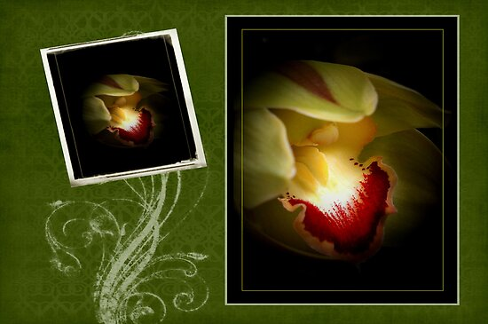Green Orchid Card by Aj Finan