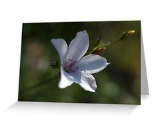 Pale Flax Greeting Card