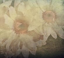 """""""Within the Haze of Daisy Days ..."""" by Rosehaven"""