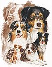 Australian Shepherd with Ghost Image by BarbBarcikKeith