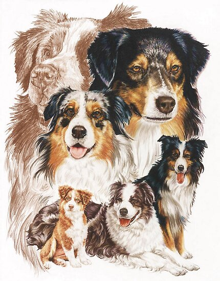 Australian Shepherd /Ghost by BarbBarcikKeith