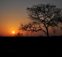 Tree at Sunset by Nick Vasko