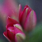 Tulips Botanic  by AnnieSnel