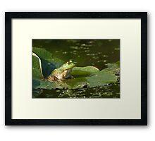 Bullfrog Framed Print