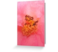 The Inner Workings of a Rose Greeting Card