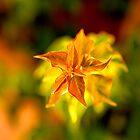 Leaves a blur by MarthaBurns