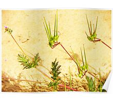 My Weeds, My Abstract Poster