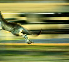 Roo on the Run by Trudi's Images