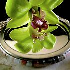 Green Orchid reflection by waxyfrog