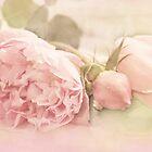 A Little Softness by Margi