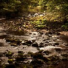 River Wharfe at Bolton Abbey 2 by Neil Messenger