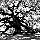 The Angel Oak Tree by anchorsofhope