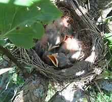Pink Baby Robins :))  Please See Sidebar.... by Debbie Robbins