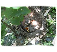 Pink Baby Robins :))  Please See Sidebar.... Poster