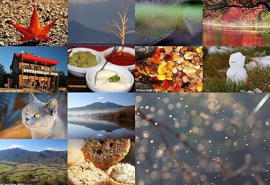 End of Autumn photo sampler by Cheryl Ridge