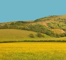 Panorama of South Downs, Sussex by Steve