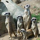 Meerkat Family  by Jenny1611
