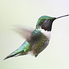 On Hummingbird Wings by Peter Waller
