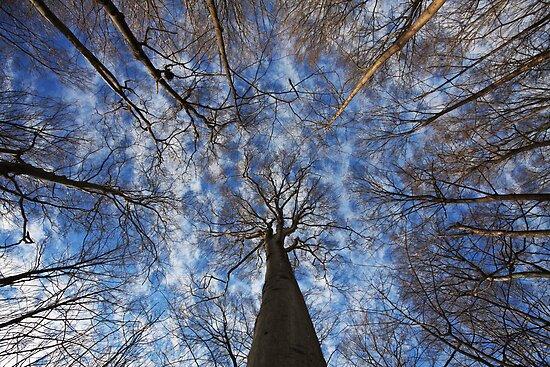 Winter sky by MIRCEA COSTINA