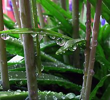 A Rainy Day by Brenda Boisvert