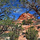 Zion's Red Rocks by Barbara Manis