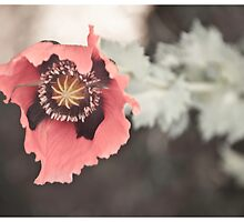 Opium Flower by Bryan  Hudson