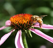 bee in the garden. by ailerons