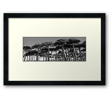 Angled Monkey Puzzle Trees Framed Print