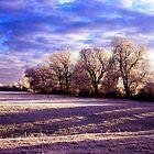 Frosty trees in hertfordshire by Michael Schmid