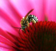 He's The Bee's Knees by Brenda Burnett