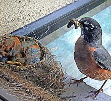 Baby Robins 5 by Debbie Pinard