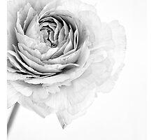 Essence Photographic Print