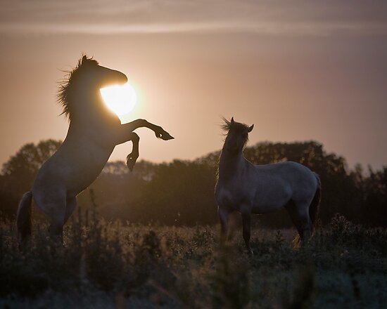 Sunset Challenge by Henri Ton