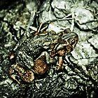Froggy Back by MasonJarMedia
