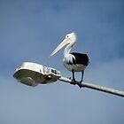 Pelican Lookout by ardwork