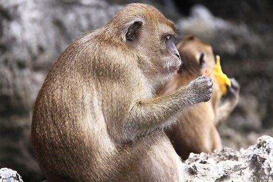 Monkey Island resident by Hege Nolan