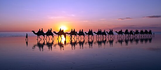 Iconic Camels on Cable Beach by Liz Percival