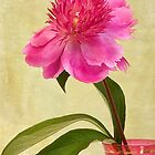 Peony in Pink Vase by Leslie Nicole