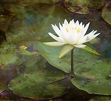 Light in the Pond by Linda  Makiej Photography