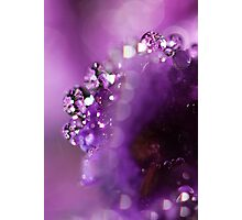 Violet Water Photographic Print