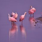 Roseate Spoonbills, As Is by Kim McClain Gregal