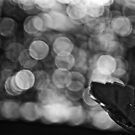 When B&amp;W is Bokeh...: On Featured work: The-women-photographer Group by Kornrawiee